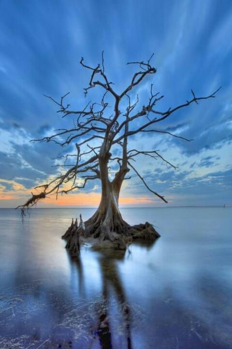 Beautiful alone tree