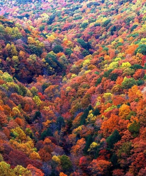 Colorful fall trees