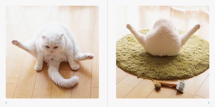 """Cat's Feet"" ISBN:978-4-7562-4994-4  Published by PIE International"