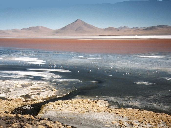 Altiplano Laguna Colorado