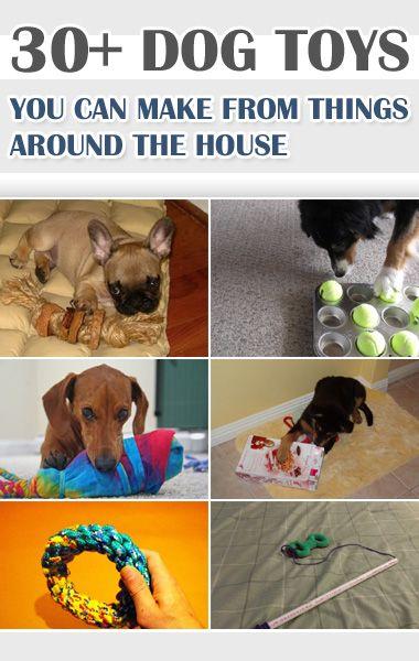 30 + Hundespielzeug können Sie von Sachen um das Haus machen