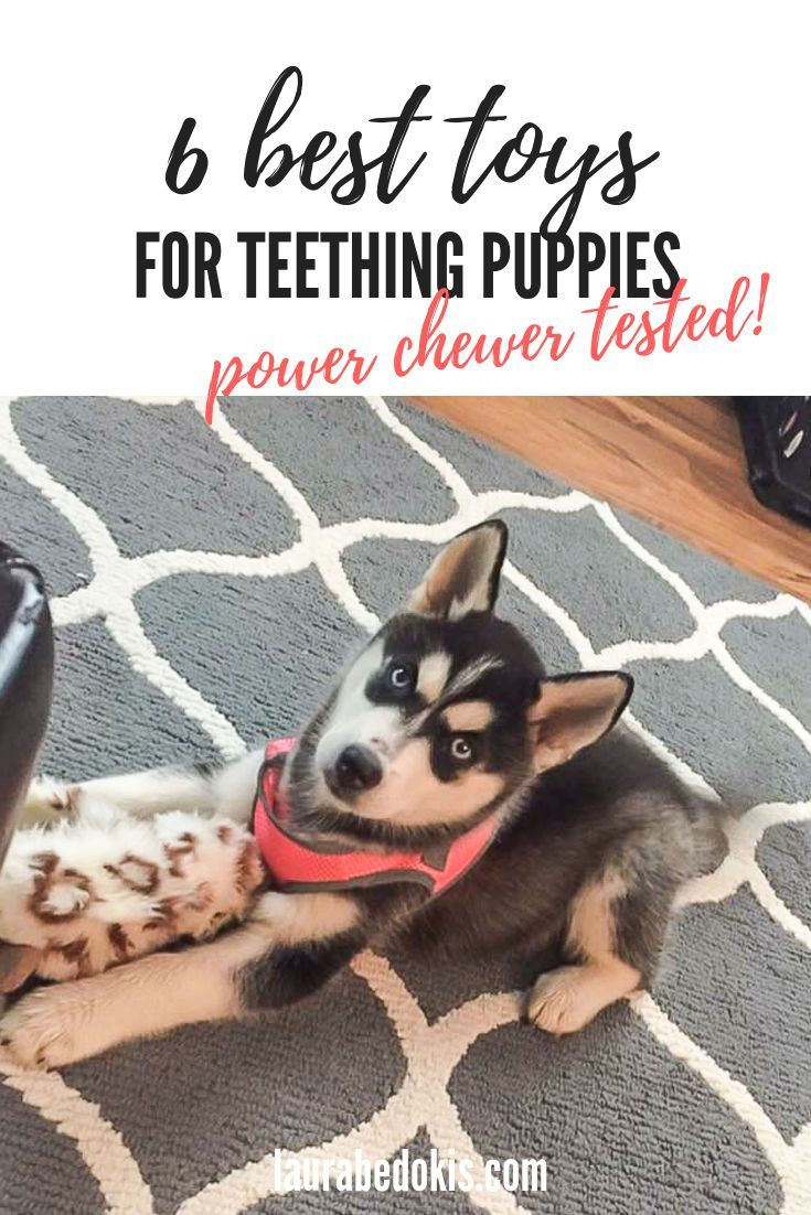 6 Best Puppy Teething Toys Puppy Teething Best Puppies Toy Puppies