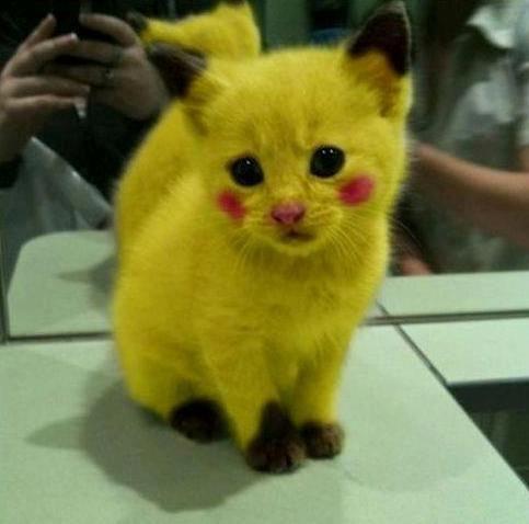 Unduh 63+  Gambar Kucing Warna Oren Lucu HD