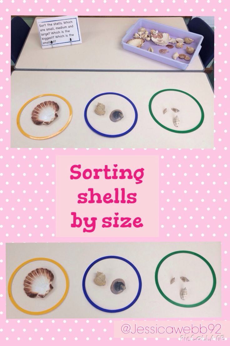 Sorting shells by size. EYFS