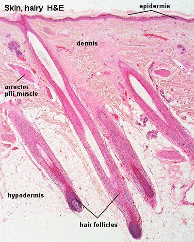 Publications | Multidisciplinary Cutaneous Lymphoma ...
