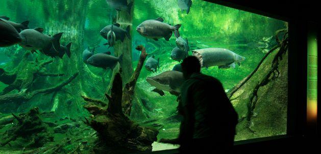Visita el Bosque Inundado en Cosmocaixa Barcelona