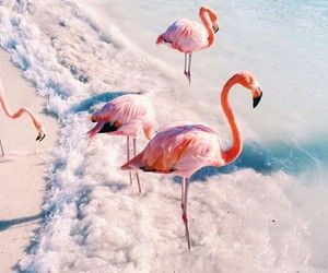 Pink Flamingos   We Heart It