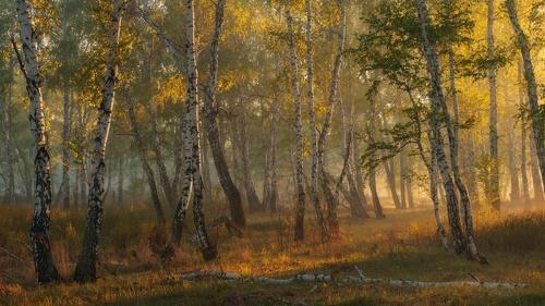 Фотограф marateaman (Marat Akhmetvaleev) - Весенняя нега #891385. 35PHOTO