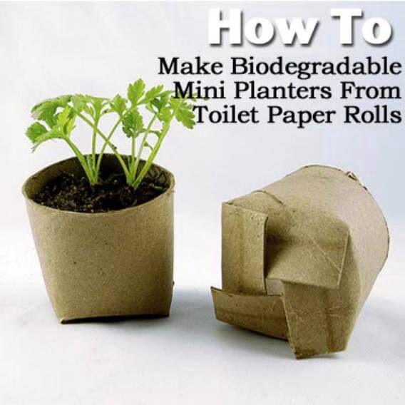 Pots from toilet paper rolls.