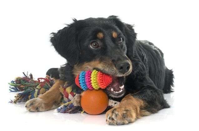 10 Best Interactive Dog Toys For Bored Pooches Interactive Dog