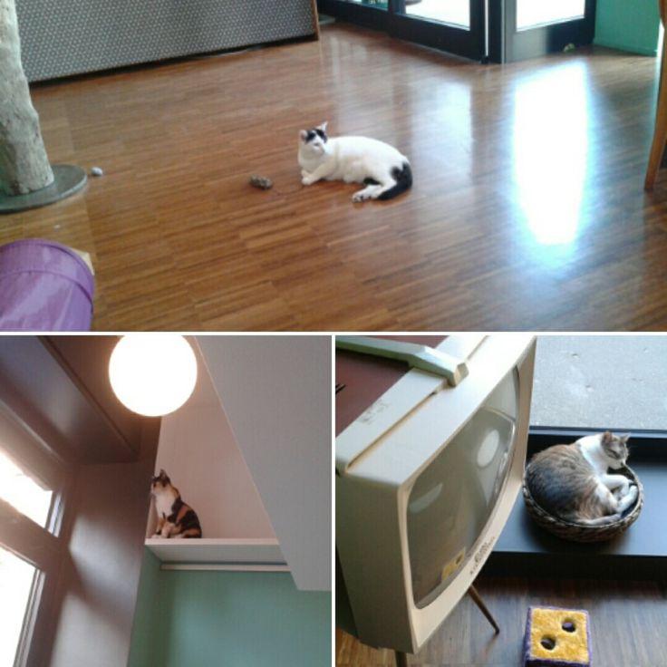 crazy_cat_cafe_2