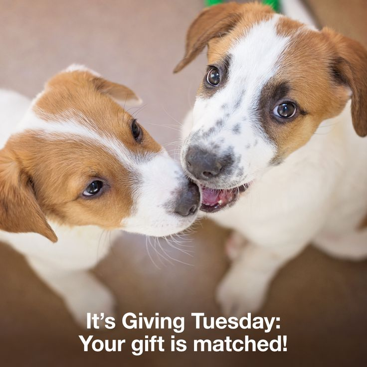 Happy Giving Tuesday! Today, people all over the world are joining together in a single act of kindness: They are supporting the causes most dear to them. And at Best Friends, Giving Tuesday is extra special, as it also marks the launch of our holiday matching challenge, meaning your gift to the animals is matched! Let's kick it off in a huge way — by helping to raise $500,000 for homeless pets before the clock strikes midnight tonight!  Join us to help Save Them All HERE!