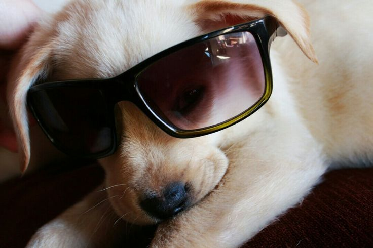 My dog bono#you most probably know where we got it from(hints the glasses)