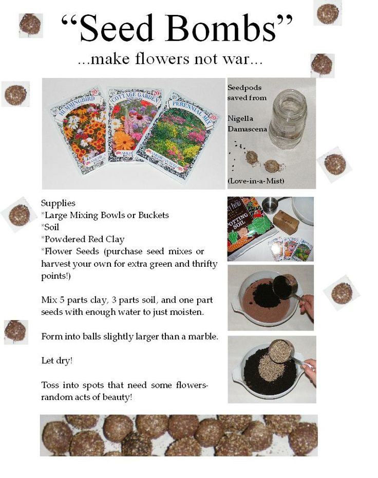 Lexacats Crafts: Seed Bombs.  I'm going to make thousands of these seed bombs and go attack nature with my grands (whenever I get some..lol).