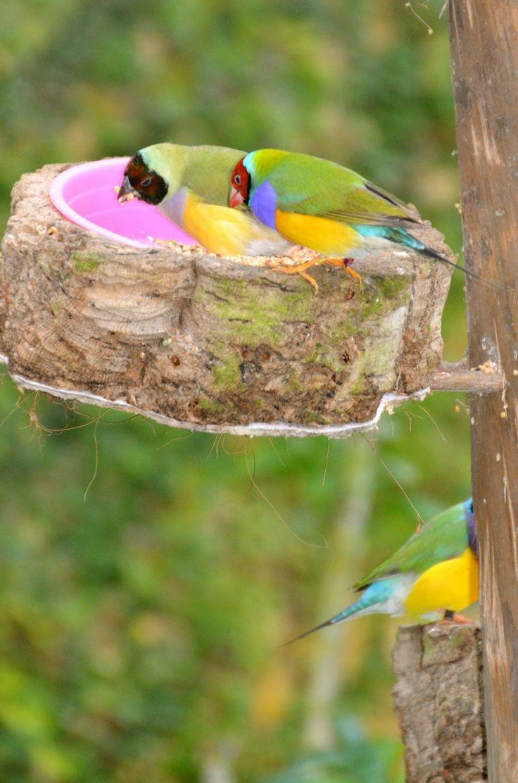Prachtige vogeltjes in de vlindertuin. #Benalmadena