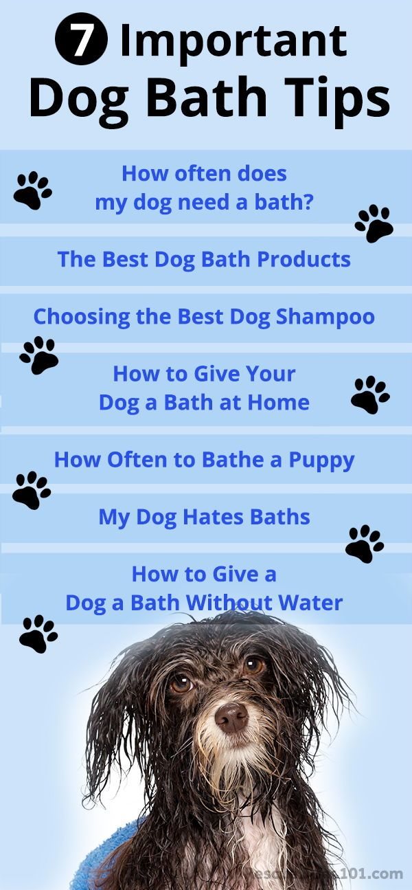7 Important Dog Bathing Tips Dog Grooming Tips Best Dog Shampoo