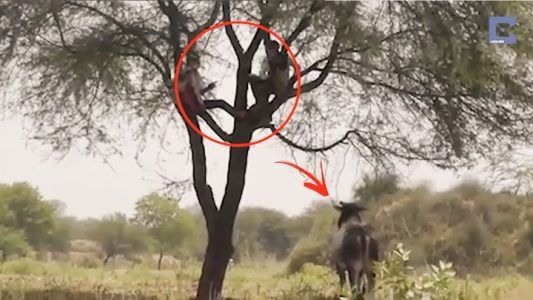 Climbing a tree for safety    Credit: Caters News Agency #news #alternativenews