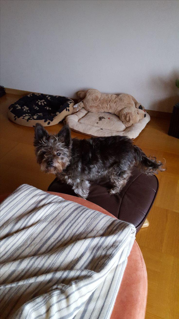 Hunde Foto: Kerstin und Gina - Meine süße Hier Dein Bild hochladen: http://ichliebehunde.com/hund-des-tages  #hund #hunde #hundebild #hundebilder #dog #dogs #dogfun  #dogpic #dogpictures