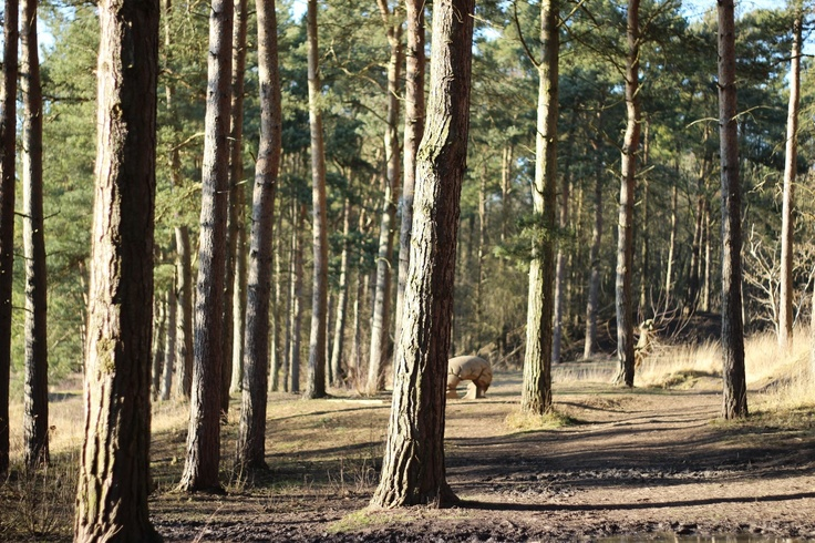 Irchester Country Park Canon 600 D
