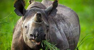 Bali Safari Marine Park Rhino Package | Zoo Admission Online Booking