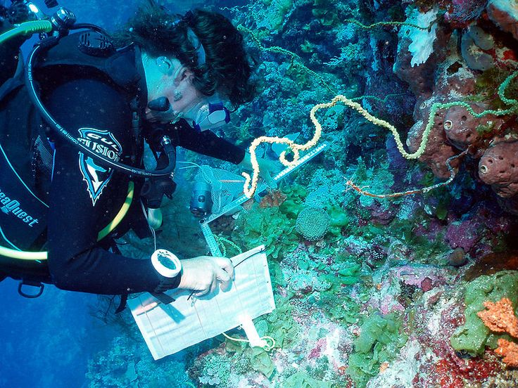 Scientist recording coral species for ongoing monitoring work in the archipelago