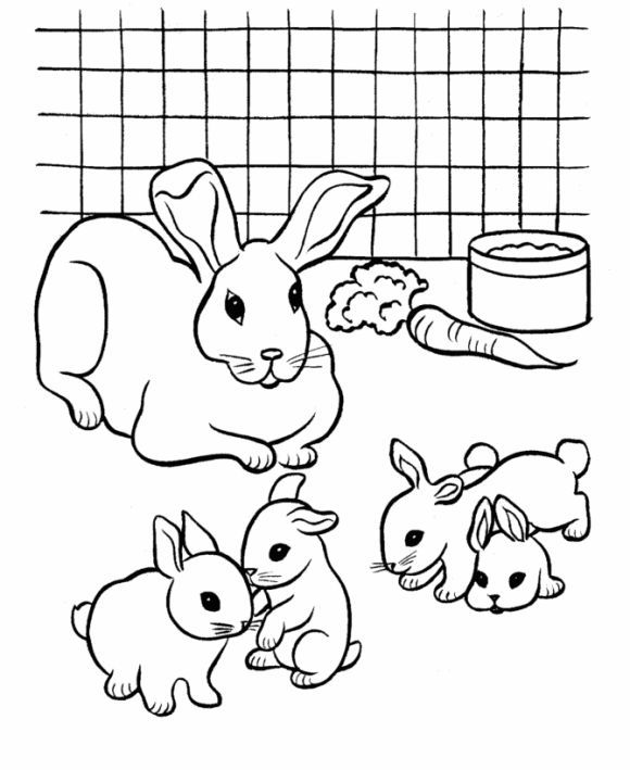 Drawn rabbit baby animal - Pencil and in color drawn ...