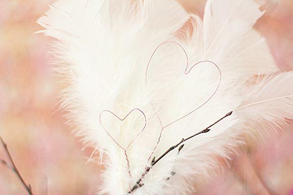 Hjärtan och fjädrar