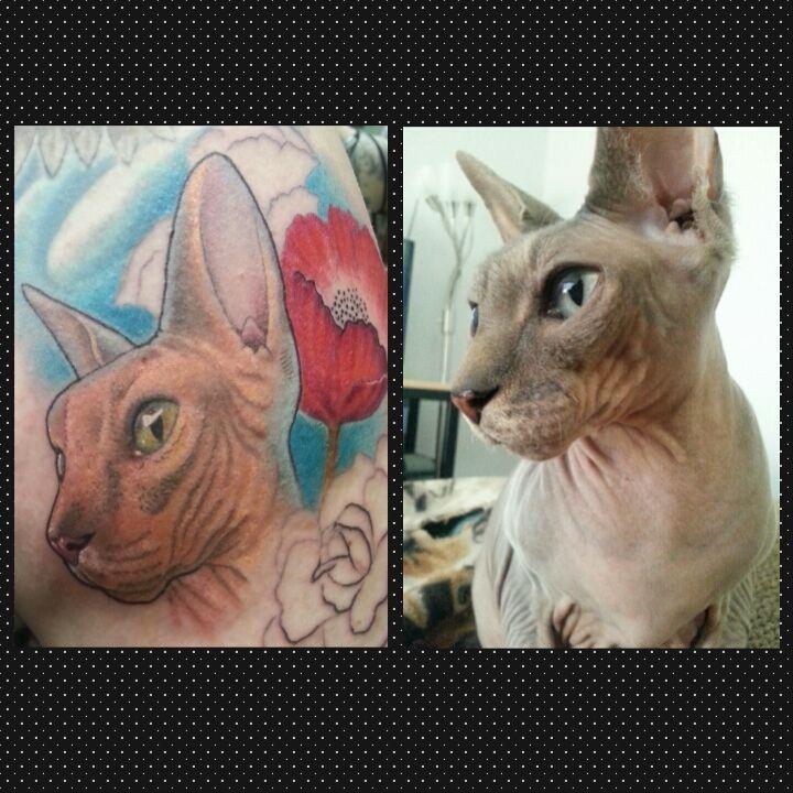 Sphynx Cat For Sale Ebay