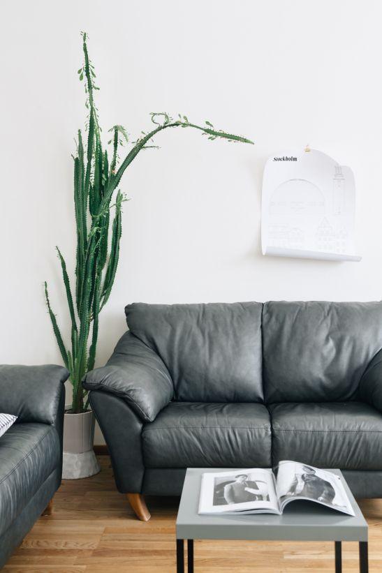 Sofa Poster Studio Esinam plant