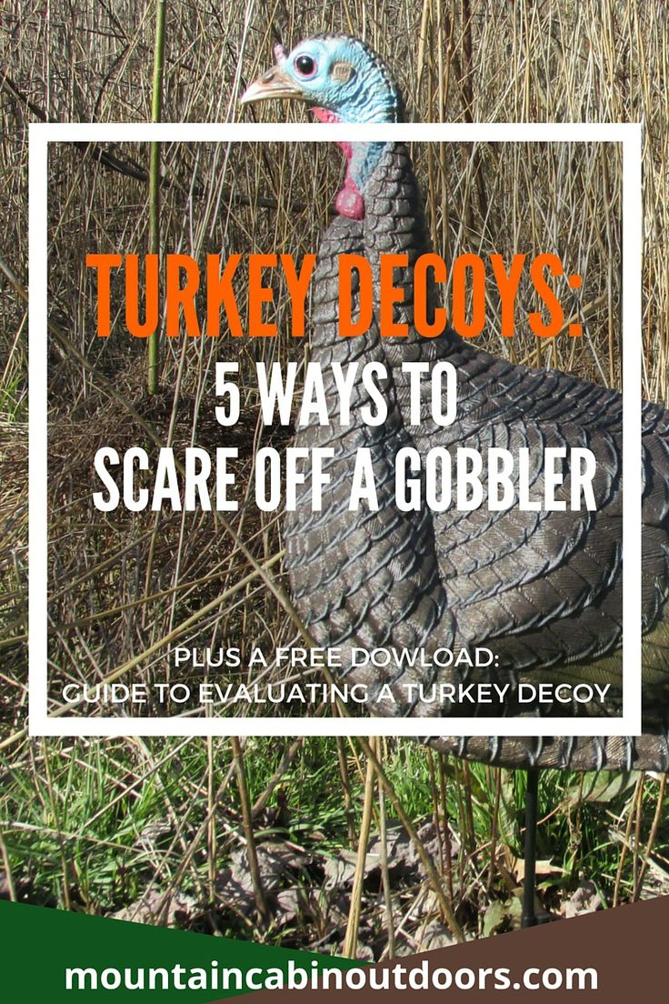 Find out how turkey decoys can actually hurt you in the field and scare away that big gobbler. Plus download a free guide to evaluating a turkey decoy. | Turkey Decoys: 5 Ways to Scare Off a Gobbler | Mountain Cabin Outdoors | http://mountaincabinoutdoors.com/turkey-decoys-5-ways-scare-off-gobbler