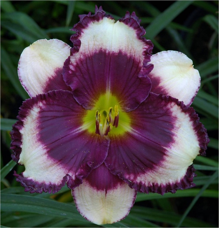 Names Of Lilies With Pictures: 164 Best Garden: Daylilies With Musical Names Images On