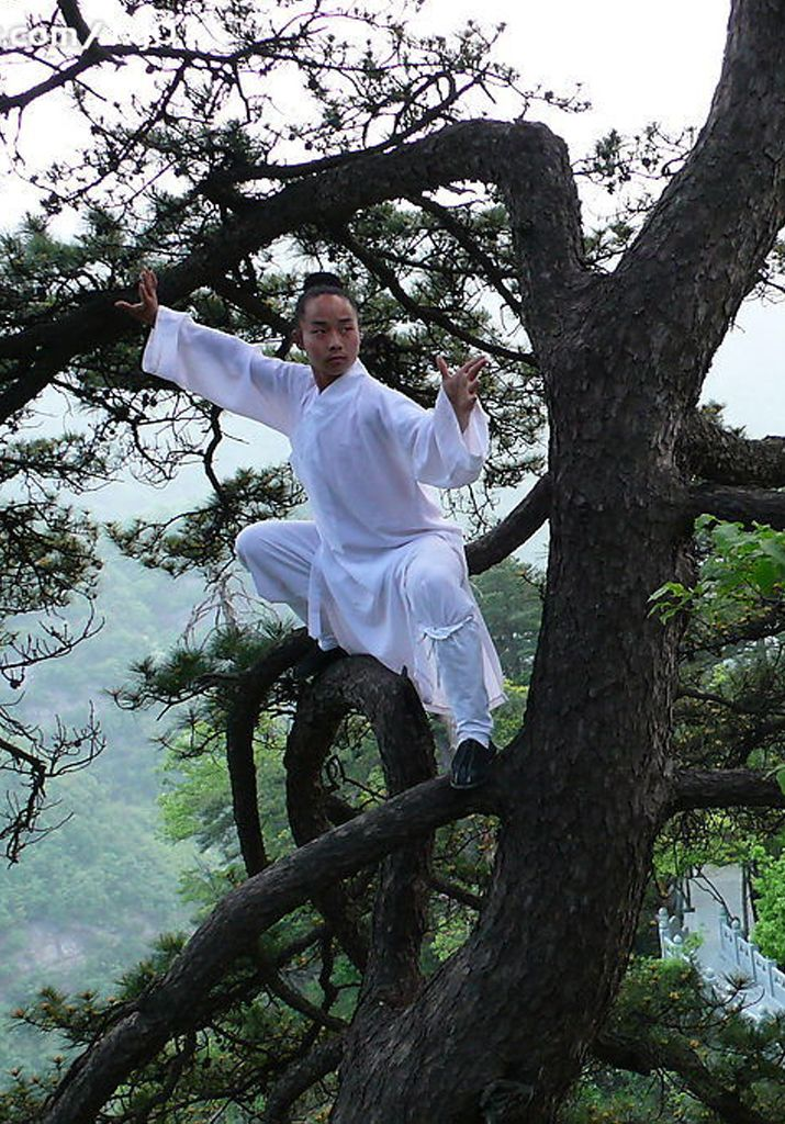 ♂ World martial art, Chinese Kungfu man on the oak tree http://www.bustourconnect.com/story.php?title=awesome-events-in-advanced-muay-thai-mma-wresteling-etc-|-renzo-gracie-fight-academy-|-brooklyn-fight-club