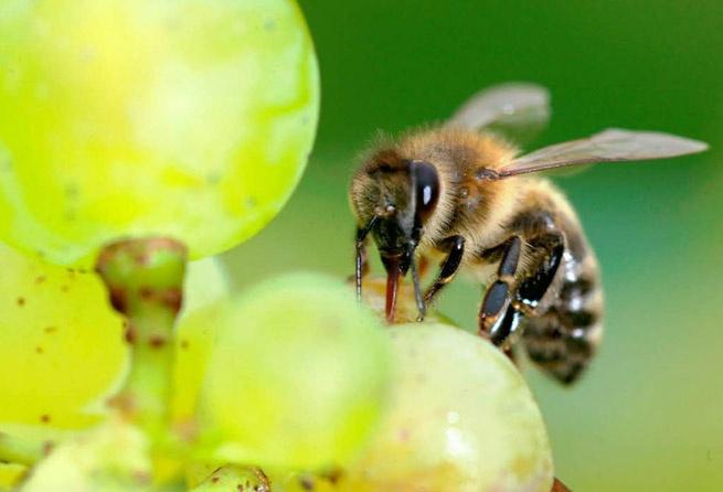 colony collapse clothianidin pesticide probable cause. Needs banning.Jak Bych, Collap Clothianidin, Jako Zápisník, Collapsible Clothianidin, Naše Zahradi, Pouz Jako, Celém Světě, Colonial Collapsible, Clothianidin Pesticide
