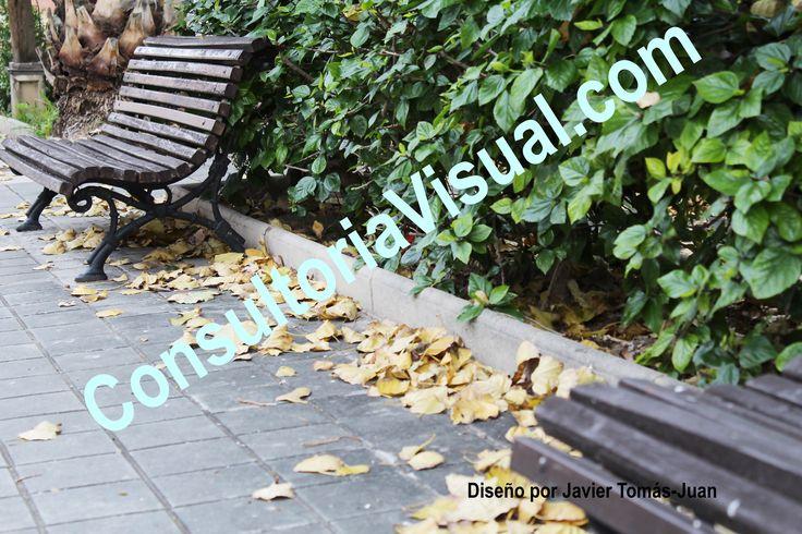 Transmite la importancia del cuidado de la visión en otoño a los usuarios de lentes de contacto.
