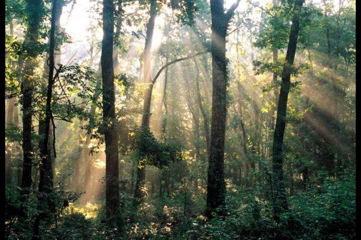 Foresta Umbra - Parco Nazionale DSL Gargano