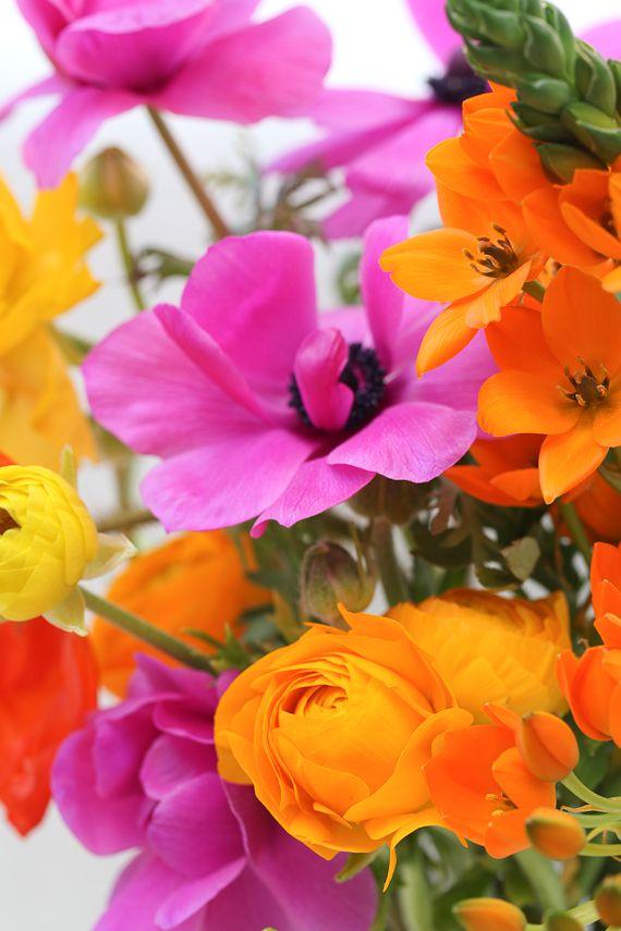 Rainbow: Pink Flower, Spring Flower, Color Flower, Spring Color, Color Combos, Bright Color, Bold Color, Summer Color, Summer Flower