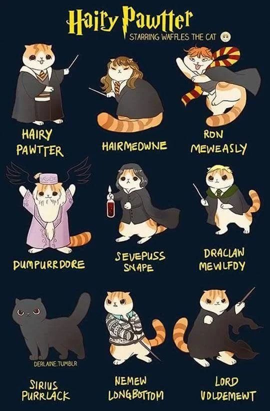 So cute! I love cats and Harry Potter ⚡