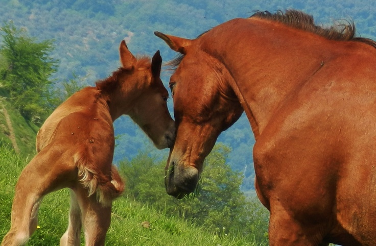 """Baby horse just born with mother - Italy - """"Riviera dei Fiori"""""""