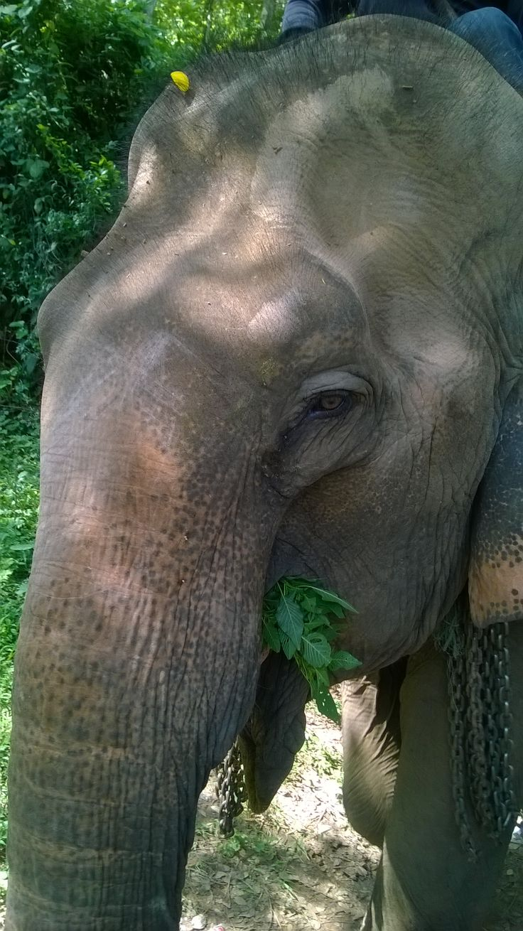 Saving one of my most favorite animals. Not many left. We are rescuing in Laos!