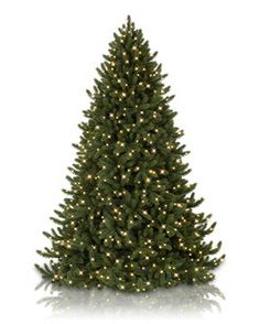 Artificial Christmas Trees 6 to 6.5 Feet Tall - Balsam Hill