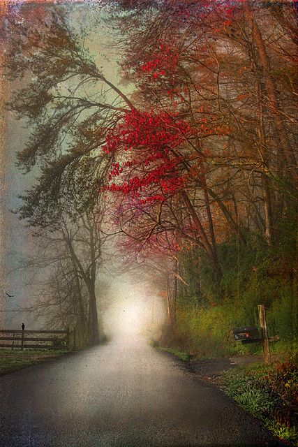 wonderful texture work: Photos, The Roads, Paths, Country Roads, Autumn Leaves, Trees, Pathways, The Way, Weights Loss