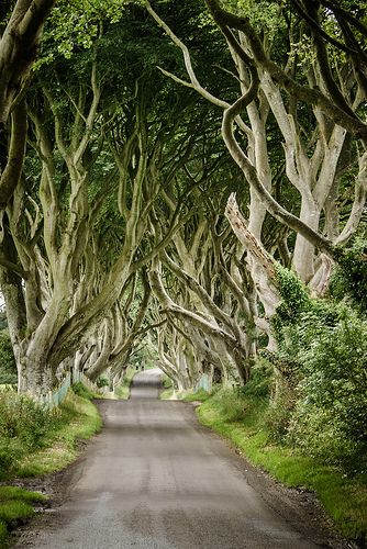 the dark hedges, northern ireland by laughlinc, via Flickr