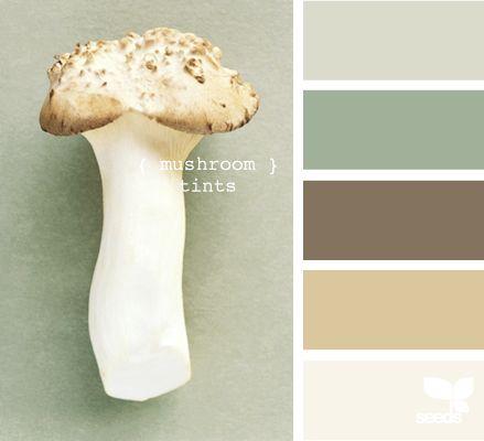 Mushroom Tints - Design Seeds - bathroom downstairs