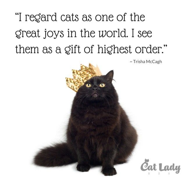 Cat Stock Quote 18 Best Cat Quotes And Cat Lady Wisdom Images On Pinterest  Cat