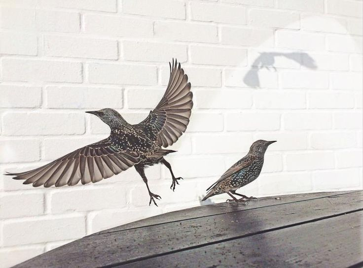 Photographers of the Year iPhone Photography Awards. <br> Second place,  <i>Cafe Birds</i>.