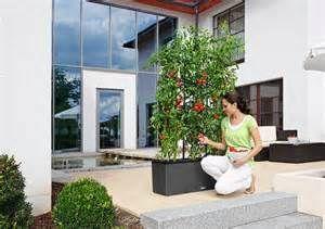 Large Self Watering Planters - Bing Images
