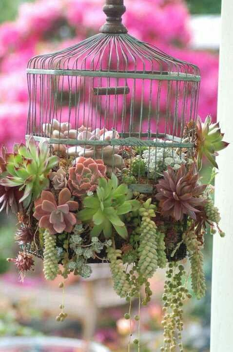 Succulents cascade from a birdcage...
