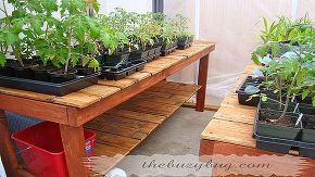 recycled wood fence turned into a beautiful greenhouse bench, gardening, repurposing upcycling, GREENHOUSE BENCH