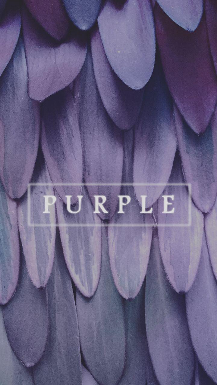 Purple / Morado                                                                                                                                                                                 Más