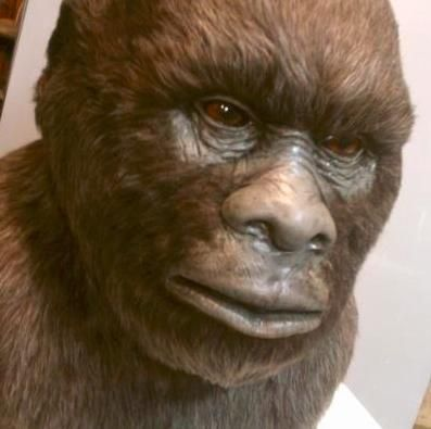 Bigfoot News Blog: Encouraging readers to draw their own conclusions from the evidence and arguments.